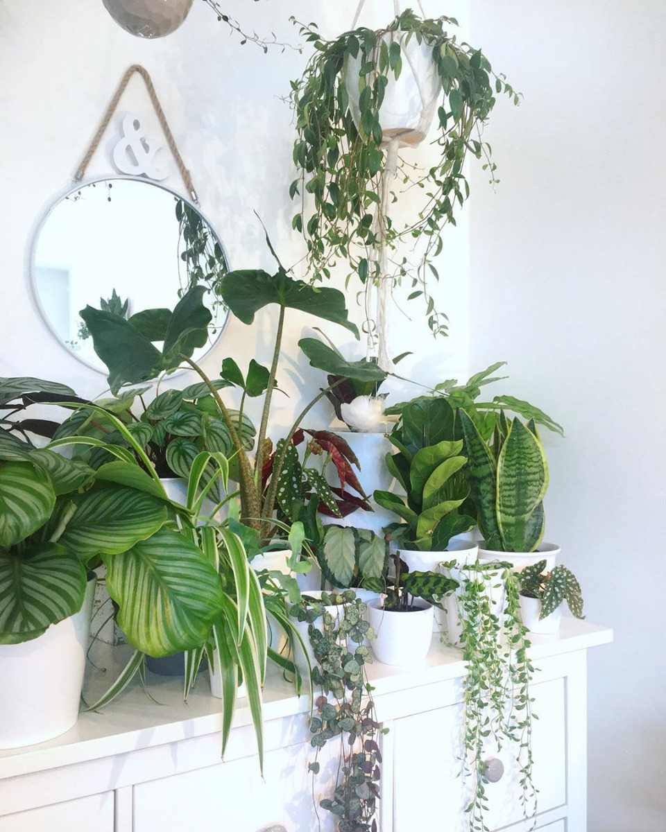 Urban jungle inšpirácie